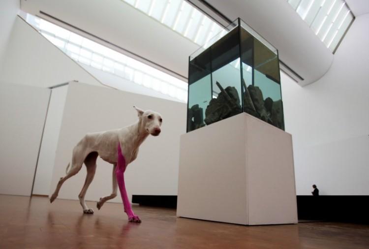 Pierre Huyghe tentoonstelling in het Ludwig Museum