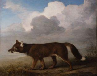 George Stubbs - Dingo
