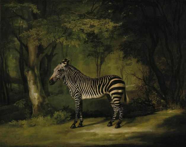 George Stubbs - Zebra